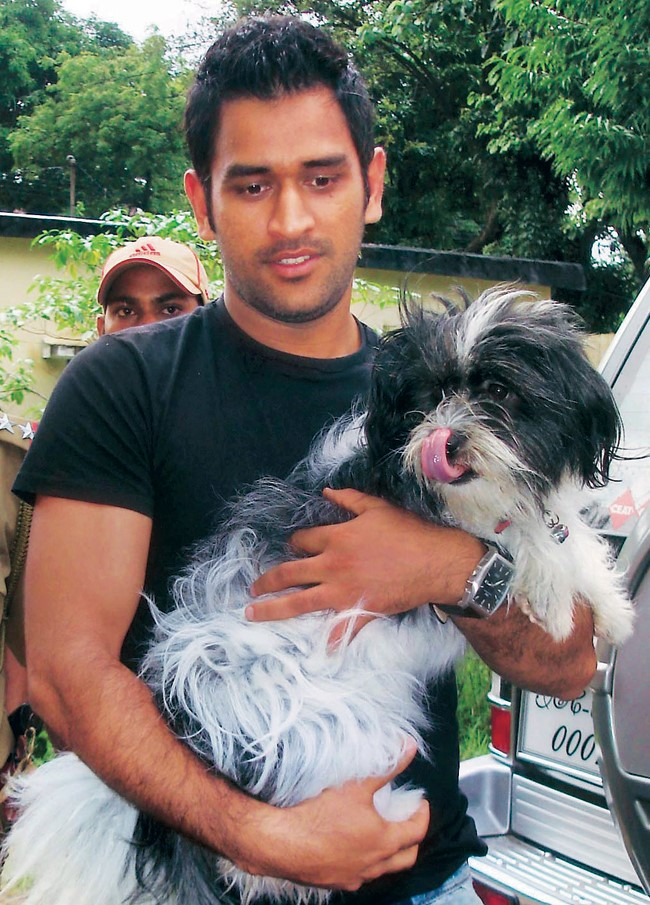 msd-dogs