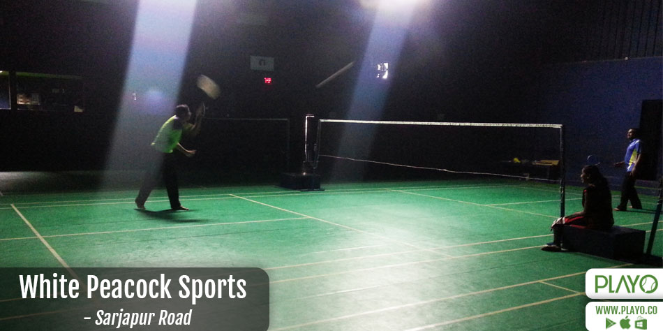 White peacock sports badminton Sarjapur