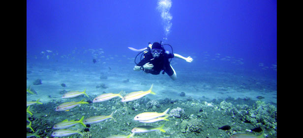 scuba diving in iandaman