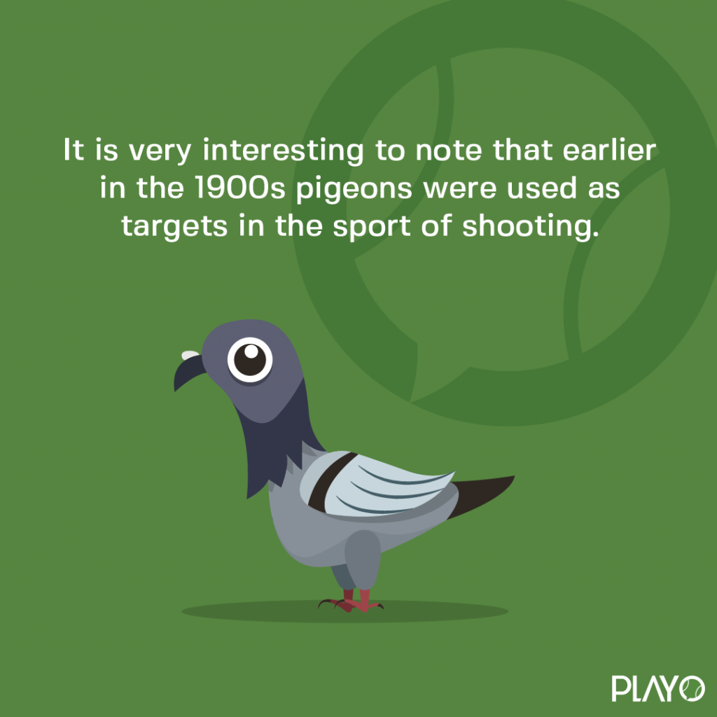 It is very interesting to note that earlier in the 1900's pigeons were used as targets in the sport of shooting.